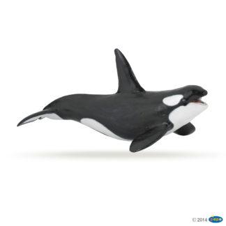 Papo Killer Whale - Marine Life figure - Papo 56000