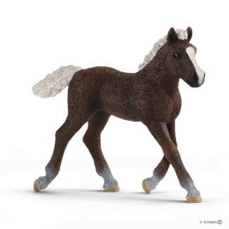Black Forest Foal (Schleich 13899) | LeVida Toys